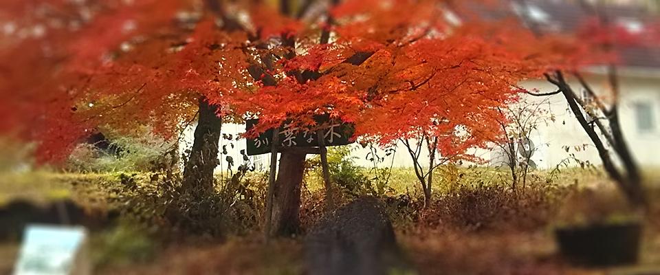 葉な木ギャラリー